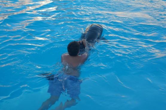 Delfinschwimmen Sharm El Sheikh