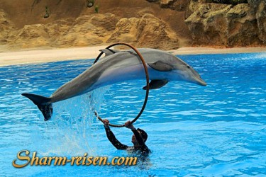 Delphinshow Sharm El Sheikh