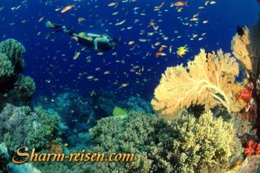 Tauchen Sharm El Sheikh