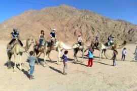 kamelreiten Sharm El Sheikh